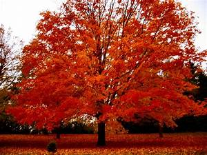 Soul Amp: Autumn Tree Photos in a Drizzling Rain in ...