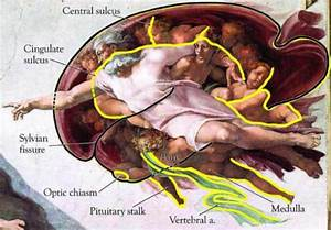 Neurologists Discover Michelangelo's Paintings Of God With ...
