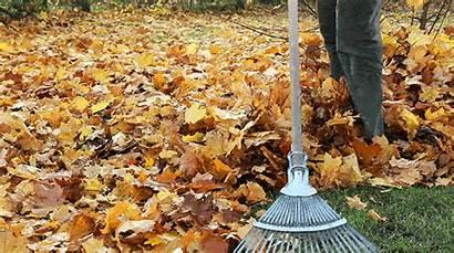Leaves Raking Autumn Leave Rake Curb Raked