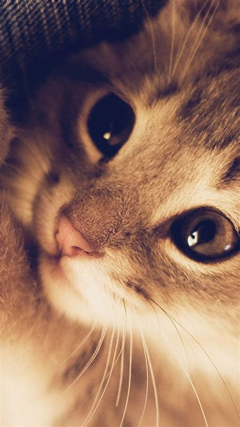 cute cat kitten nature animal warm macro iphone