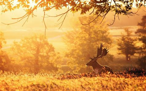 Morning Animal Wallpaper - deer morning trees sun rays wallpaper animals