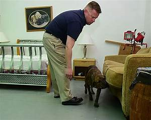 sniffing dogs help get rid of bed bugs the daily courier With bed bug training