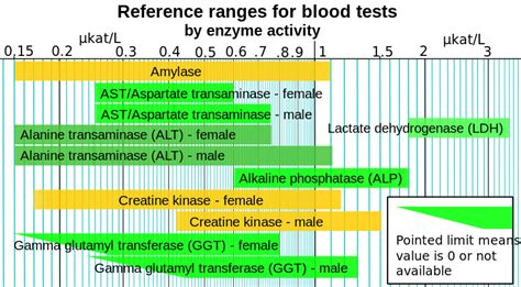 file reference ranges for blood tests by enzyme activity svg wikimedia commons