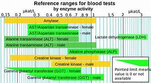 Blood Test Normal Values Chart File Reference Ranges For Blood Tests By Enzyme Activity