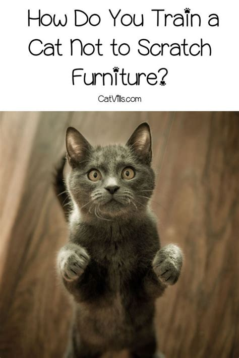 train  cat   scratch furniture cats