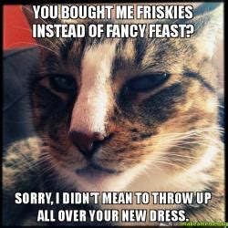 Fancy Feast Meme - you bought me friskies instead of fancy feast sorry i didn t mean to throw up all over your