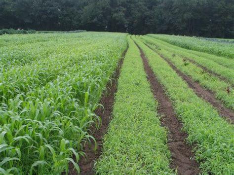 summer cover crops   soil builders ieassaieassa