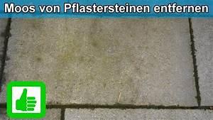 Moos Entfernen Hausmittel : moos gr nbelag von pflastersteinen terrasse entfernen hausmittel moosentferner ~ A.2002-acura-tl-radio.info Haus und Dekorationen