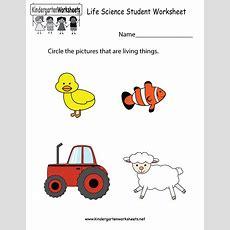Life Science Student Worksheet  Free Kindergarten