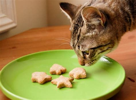 cats eat oatmeal  foods  safe unsafe