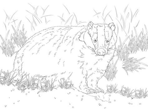 european badger coloring page supercoloringcom