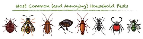 top   annoying pests   pest information