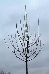 Wann Apfelbäume Schneiden : obstbaumschnitt alle h nde voll zu tun ~ Lizthompson.info Haus und Dekorationen