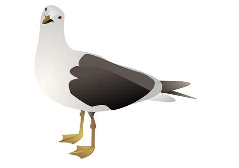 Seagull Clipart Seagull Clip Transparent Cliparts