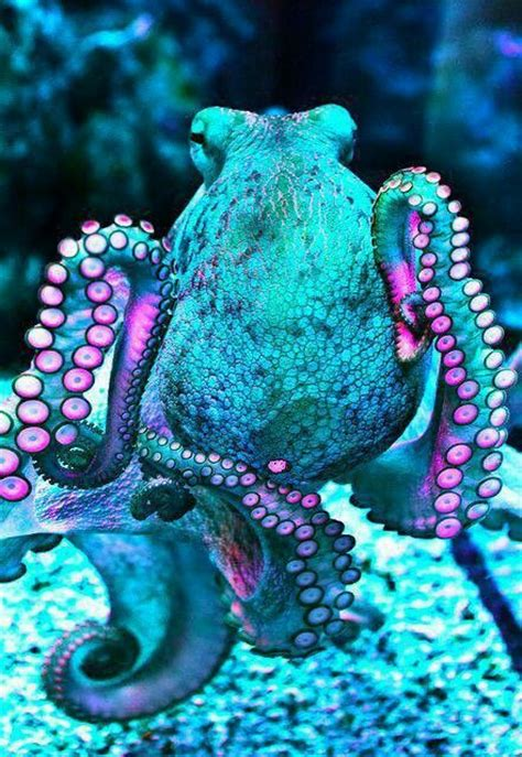 what color is an octopus the world s catalog of ideas