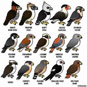 Birdorable birds of prey | Birdorable | Pinterest | Bird ...