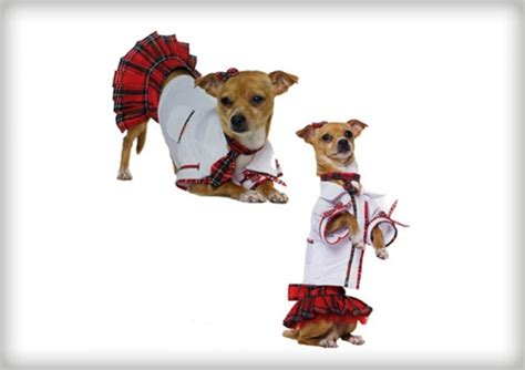 buy halloween costumes dogs page askmen