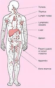 Lymph Nodes Female | Ovarian Cancer  Lymph