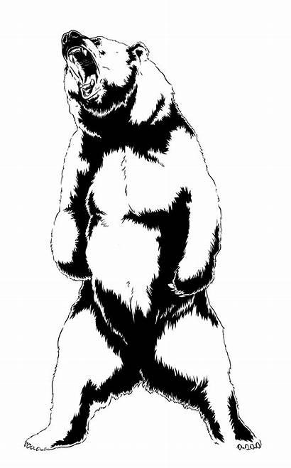 Bear Drawing Roaring Clipart Grizzly Roar Silhouette