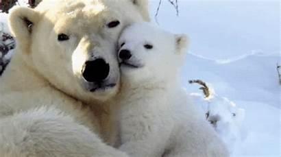 Animals Cuddling Gifs