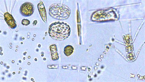 voyage update  phytoplankton diversity  production niwa