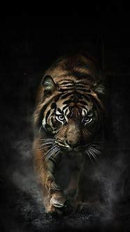 Tiger HD Wallpaper For Your Mobile Phone SPLIFFMOBILE ...