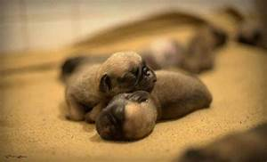 Newborn Puppies Pictures, Photos, and Images for Facebook ...