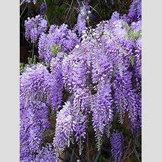 1000+ Images About What Flower Is This? On Pinterest