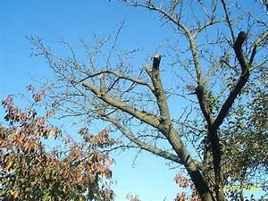 Wann Schneidet Man Hortensien Zurück : gem se und obstgarten wann schneidet man einen mirabellenbaum ~ Eleganceandgraceweddings.com Haus und Dekorationen