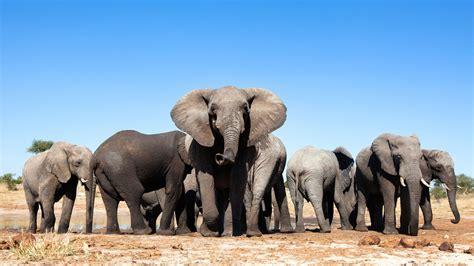 zimbabwe  september natural world safaris