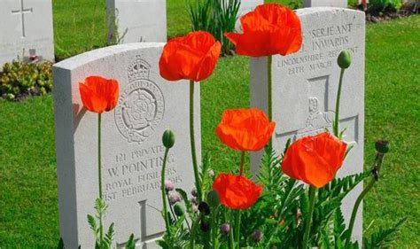 when did poppies become symbol of remembrance first world war tribute grow your own poppies to mark 100 years since fighting broke out wwi