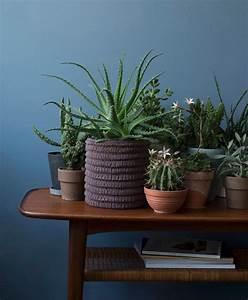 Grünpflanzen Im Schlafzimmer : gr npflanzen im zimmer so werden sie in szene gesetzt zuhausewohnen ~ Watch28wear.com Haus und Dekorationen