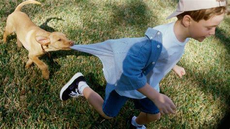 hundebisse bei babys und kindern richtig behandeln