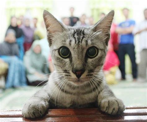 reddit cat cute monday edition photobombs