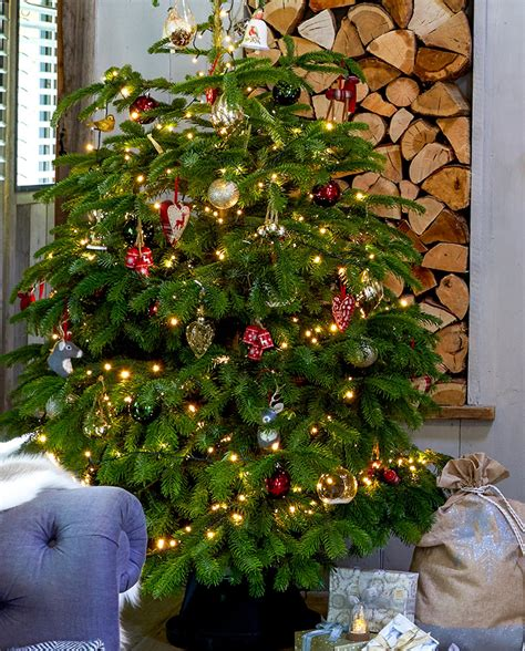 christmas decorations inspirational colour trends