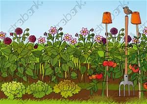 Jardin Dessin Couleur : potager illustration jardin libre de droit sur ~ Melissatoandfro.com Idées de Décoration