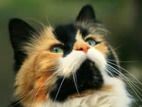 cat animal cats pride free animal wallpaper
