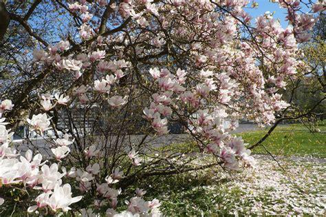 Botanischer Garten Der Universität Leipzig Leipzig by Impressionen Aus Dem Botanischen Garten Der Universit 228 T