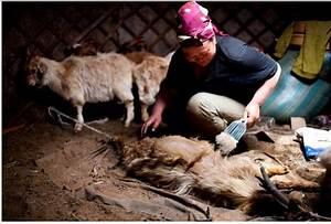 Kaschmir Wolle Tier : kaschmir textilien direkt vom ursprungsland t fner ~ A.2002-acura-tl-radio.info Haus und Dekorationen