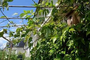 Pergola En Bambou : pergola de balcon balcon et terrasse waterloo brise vue ~ Premium-room.com Idées de Décoration