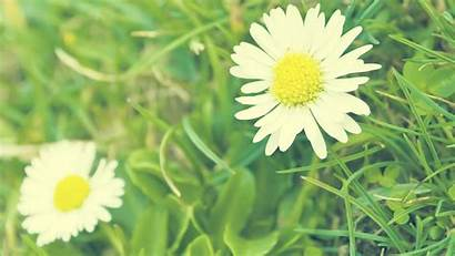 Daisy Wallpapers Background Flowers Desktop Orange Awesome