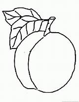 Peach Coloring Clipart Designlooter 930px 42kb sketch template