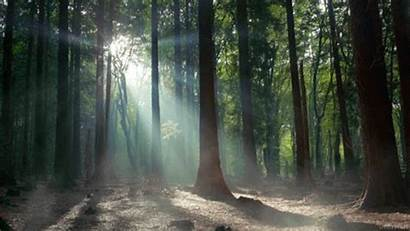 Morning Cinemagraph Nature Giphy Gifs Smoke Forest