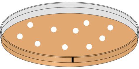 plaque de cuisine image vectorielle gratuite boîte de pétri inoculation image gratuite sur pixabay 312452