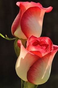 The 20 Most Beautiful Flowers In The World | The Stuff ...
