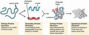 Quirky Facts About Biomolecules You Probably Didn U0026 39 T Know