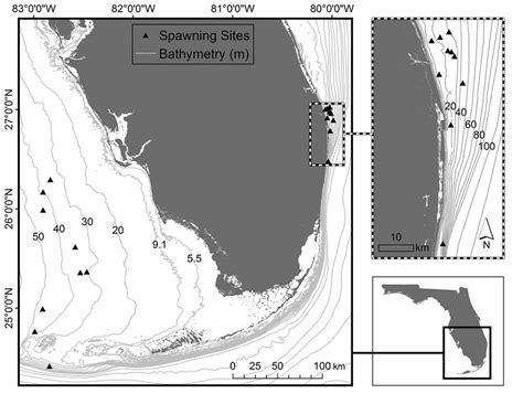grouper goliath itajara epinephelus atlantic confirmed map spawning florida panel