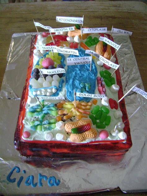 plant cell cake model the sojourner edible cell project