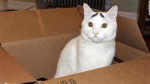 feline cat cat flats designing human apartments for feline friends