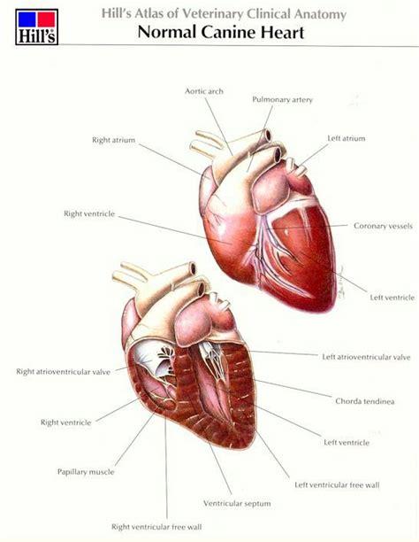 bhvg valve disease mitral valve disease pulmonary